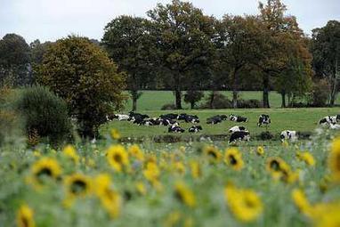 Conférence environnementale : les contributions positives de l'agriculture à l'honneur | Chimie verte et agroécologie | Scoop.it