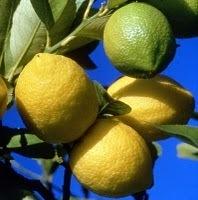 Les bienfaits du citron | Les aliments et leurs vertus | Scoop.it
