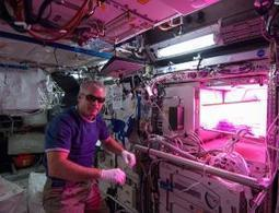Astronaut sows first fresh veg in NASA space 'garden' - space - 23 May 2014 - New Scientist | Erba Volant - Applied Plant Science | Scoop.it