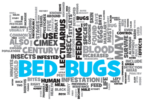 Get rid of Bed Bugs: The guide | Pest Control | Scoop.it