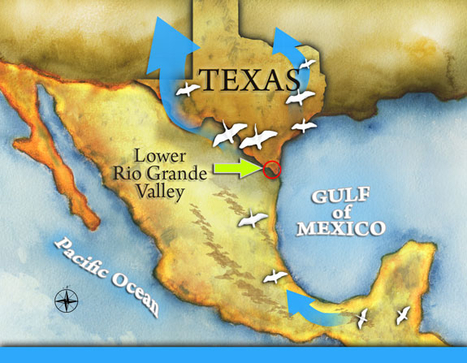 Texas Beaches Are for the public? | Texas Coast Real Estate | Scoop.it