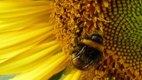 Abeilles, pesticides, préjudice écologique... ce que va changer (ou pas) la loi biodiversité - Ouest France | Agriculture en Dordogne | Scoop.it