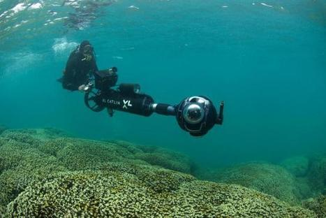 Scientists create 360-degree images of Hawaii coral reefs - U.S. News & World Report | Coral reef ecosystems resilience | Scoop.it