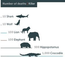 Which is the world's deadliest animal? Scuba Professionals of Arizona | All about water, the oceans, environmental issues | Scoop.it