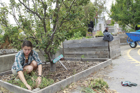 Berkeley, CA school garden grows biz model to stay afloat | School Gardening Resources | Scoop.it