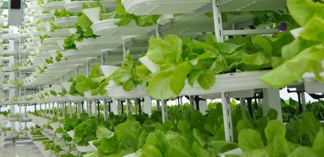 Les fermes verticales, la révolution agroalimentaire est en marche - Urban Attitude   Urbanisme   Scoop.it