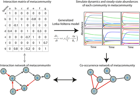 Frontiers | Deciphering microbial interactions and detecting keystone species with co-occurrence networks | Plant-Microbe-Interactions | Scoop.it