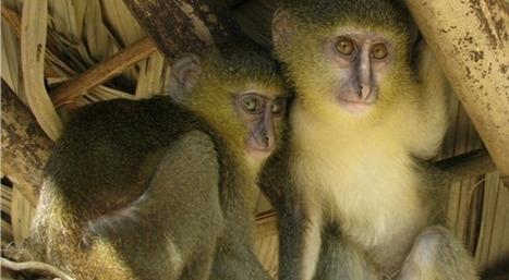 Les nouvelles espèces découvertes en 2012 | Slate | Sauvegarde et Protection des animaux | Scoop.it