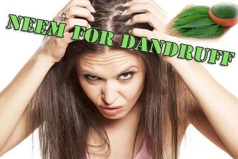 How to use neem for dandruff treatment – 7 best ways | WikiYeah | Scoop.it