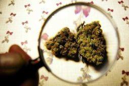 Depresión, demencia, psicosis, ¿compensa el cánnabis?/Depression, dementia, psychosis: does it compensate the cannabis?   amplia-mente.com   amplia-mente   Scoop.it