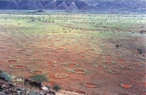 """By Building """"Fairy Circles"""", Termites Engineer Their Own Ecosystem 
