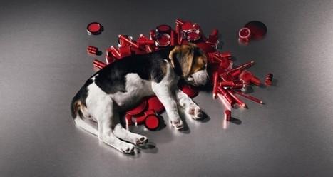 Unión Europea prohíbe las pruebas cosméticas en animales | Experimentación con animales | Scoop.it