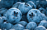 Lots of Leafy Greens Might Shield Aging Brains - WebMD | Integrity | Scoop.it