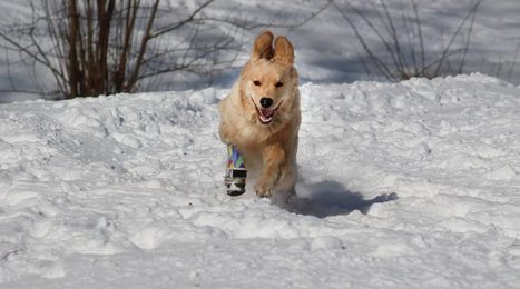 High-Tech Pet Prosthetics Give a Leg up to Man's Best Friend | Psychology and Health | Scoop.it