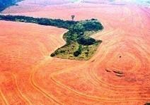 Bosques en peligro: cerca de 170 millones de hectáreas podrían perderse hasta el 2030 | Agua | Scoop.it