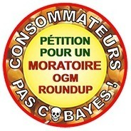 Homepage | Moratoire OGM | Abeilles, intoxications et informations | Scoop.it