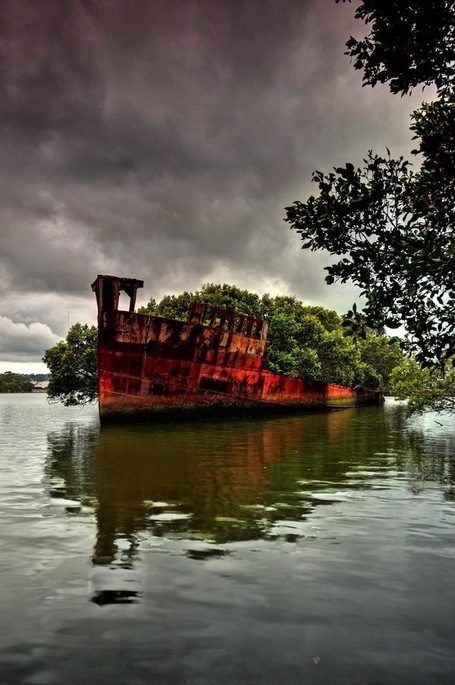 102-Year-Old Abandoned Ship is a Floating Forest - My Modern Metropolis | Le It e Amo ✪ | Scoop.it