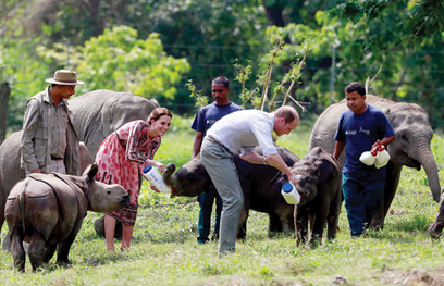 India poachers kill rhino after royal couple visit | Wildlife Trafficking: Who Does it? Allows it? | Scoop.it