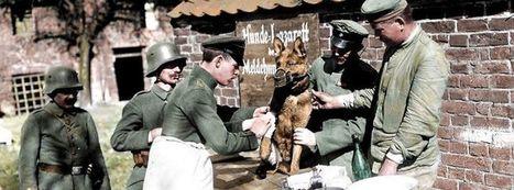 Les couleurs de l'horreur | Mon centenaire de la grande guerre | Scoop.it