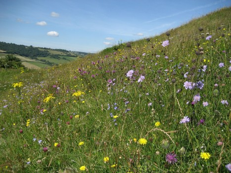 New B-Lines put the Buzz Back into the West of England | Buglife | CETB | Scoop.it
