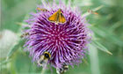 Science under pressure as pesticide makers face MPs over bee threat | The Barley Mow | Scoop.it