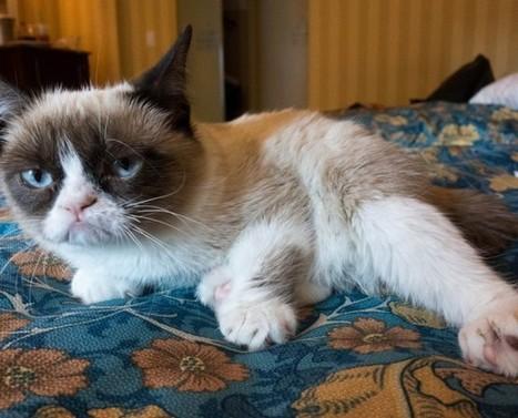 El gato más famoso de internet tendrá una línea de café - Animal ... | Café | Scoop.it