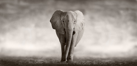 The Writ of Mandamus and the Elephant in the Room. - Veterans Law Blog   Veterans Affairs and Veterans News from HadIt.com   Scoop.it