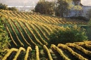 Le vignoble se rebiffe | Oenotourisme | Scoop.it
