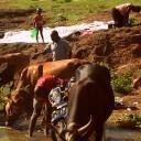 Guerre en RDC: la vie reprend près des champs de bataille | Action internationale | Scoop.it