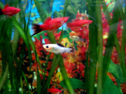 Fish Aquarium Tanks and Alzheimer's dementia - Alzheimers Support | Alzheimer's Support | Scoop.it