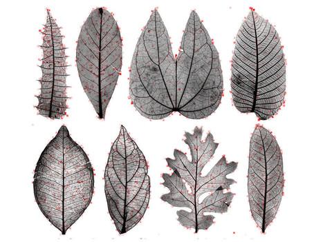 A Computer With a Great Eye Is About to Transform Botany | Uso inteligente de las herramientas TIC | Scoop.it