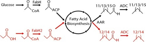 Expanding the Product Profile of a Microbial Alkane Biosynthetic Pathway | SynBioFromLeukipposInstitute | Scoop.it