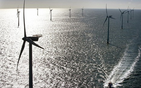 Environmentalists link whale beachings to offshore windfarm sonar | OUR OCEANS NEED US | Scoop.it