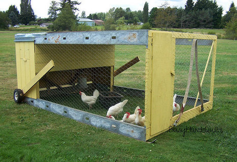 Chicken Tractor 101: What It Is & the Basics of Building One - Modern Farmer | Permaculture, Homesteading, Ecology, & Bio-Remediation | Scoop.it