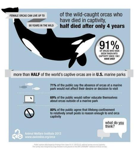 Twitter / OrcaSOS: 91% of the orcas taken into ... | #OrcaAvengers | Scoop.it