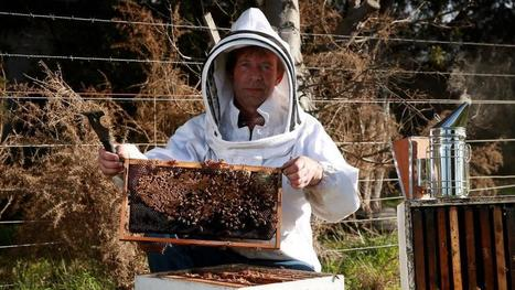 HoneyBees: Hives hit by diseases | Farming, Forests, Water, Fishing and Environment | Scoop.it