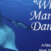 Safarious Video - When Mantas Dance | Titan Explores | Scoop.it