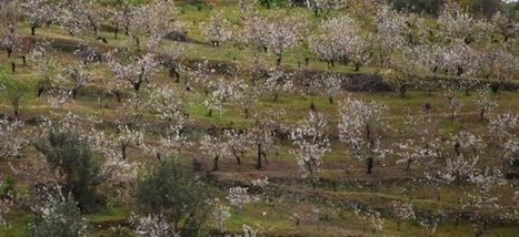 Es senyalitza la ruta dels cirerers en flor de Sant Climent | #territori | Scoop.it