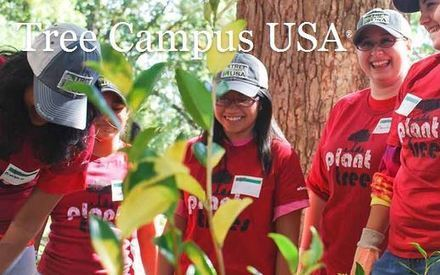 U of A receives 5th Tree Campus USA designation | KOLD (TV-Channel 13, Tucson) | CALS in the News | Scoop.it