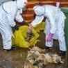 Avian influenza virus A(H7N9)