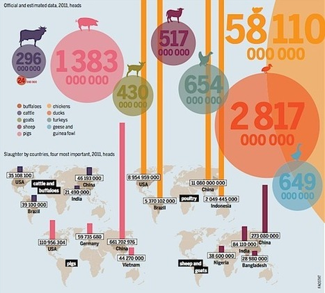 The Meat Atlas: Facts and Figures About Industrial Food Production | EcoWatch | Food issues | Scoop.it