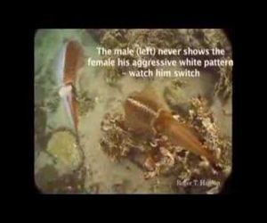 David Gallo: Underwater Astonishments : Video Clips From The Coolest One | Scuba Diving Adventures | Scoop.it