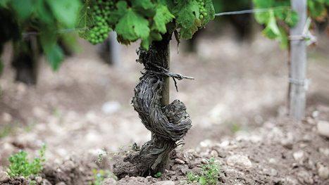 Il terroir del vino è anche dovuto ai batteri presenti nel terreno | vinokultura | Scoop.it