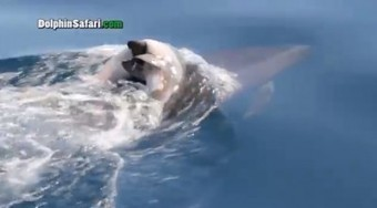 Dolphin Mom Mourns Loss Of Calf (VIDEO)   Nature Animals humankind   Scoop.it