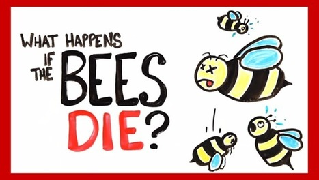 What happens if all the bees die? [video] - Holy Kaw! | Elevator Pitch: Education for Sustainability | Scoop.it