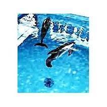 Dolphin Tale   Oceanic   Scoop.it