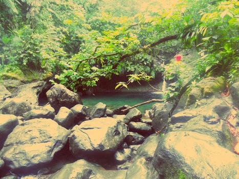 LES PETITS PARADIS DE MANON: Chutes Du Carbet/Cascade Paradise/Grand Etang, (Capesterre-Belle-Eau, Guadeloupe) | Naviguer dans les caraïbes | Scoop.it