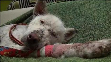 Recuperación prodigiosa de una perra vagabunda que vivía en un vertedero | Agua | Scoop.it