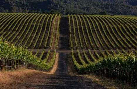 Cabernet Sauvignon and Merlot: Just think of them as the Coca-Cola and the Pepsi of viticulture | Vitabella Wine Daily Gossip | Scoop.it