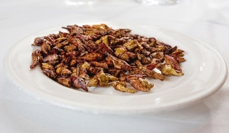 A million-dollar idea: 'Insects are the Food of the Future' | Garden Spot | Scoop.it